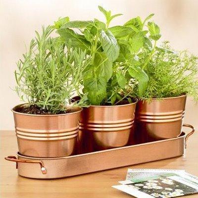 decoração plantas-aromaticas2